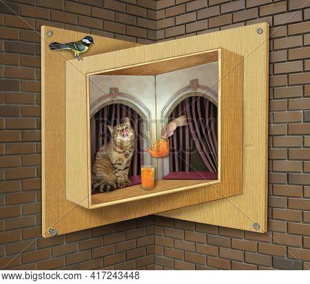 A Beige Cat Drinks Orange Juice On A Sill Of A Wooden Impossible Window.
