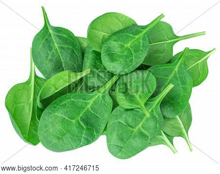 Spinach Leaves Isolated On White Background. Fresh Green Spinach Top View.