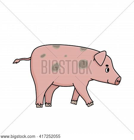 Pink Adult Boar Pig Male Is Walking Somewhere, Side Profile View. Cartoon Outline Farm Animal Is Smi