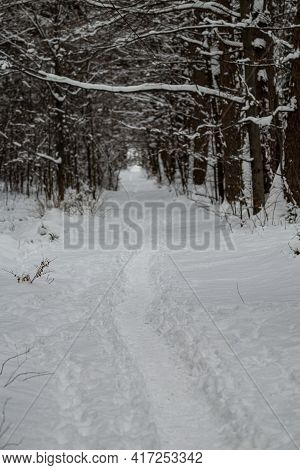 Path In The Forest At Wintertime With Fresh Snow