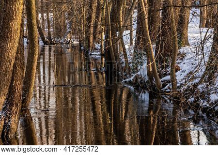 Winter Day At Not Frozen Creek Surrounded Of Snow And Leafless Tree Trunks. Brown Water In Ditch Ref