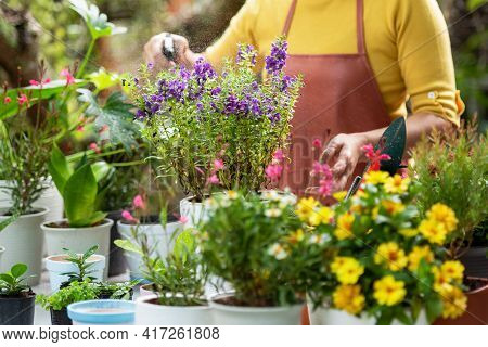 Select Focus. Close Up Hands  Woman Care  Plant Flower In Garden. People Hobby And Freelance Gardeni
