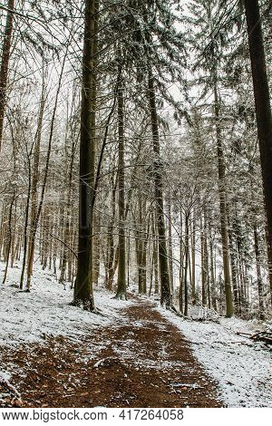 Forest Path With Fresh Snow. Beautiful Snowy Trees. Cold Winter Day Outdoors. Frozen Snowy Trees. Ch