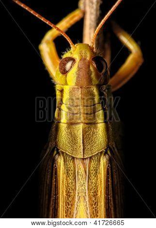 Grasshoper Macro