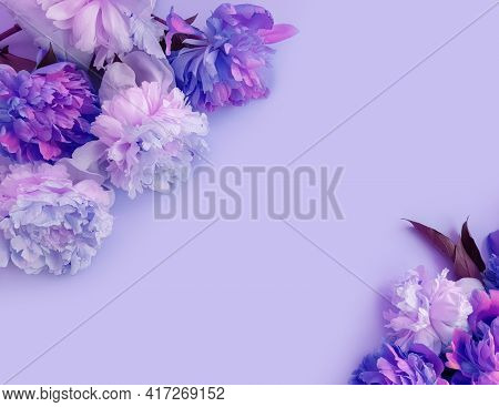Beautiful Peony Flower On Colored Background Blossom