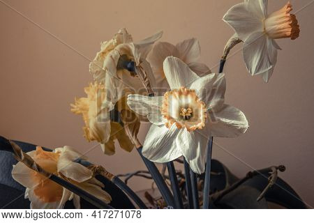 Narcissus Spring Flowers Hdr Image. White And Yellow Narcissus Bouquet. Fresh Narcissus Plant From T