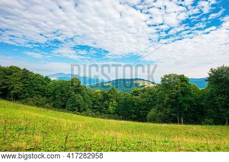 Summer Landscape Of Carpathian Mountains. Beautiful Scenery In The Morning. Beech Forest And Grassy
