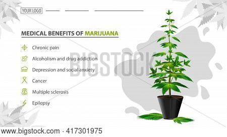 Medical Benefits Of Marijuana, Poster For Website With Bush Of Cannabis In A Pot. Benefits Uses Of M