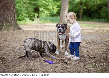 Adorable Toddler Girl Playing With Family Dogs Outdoors. Boxer Dog Standing Next To Child, French Bu