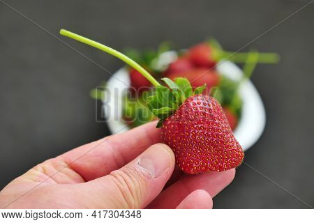 The Man Has A Misshapen Strawberries, Shapeless Strawberries With Hormones,
