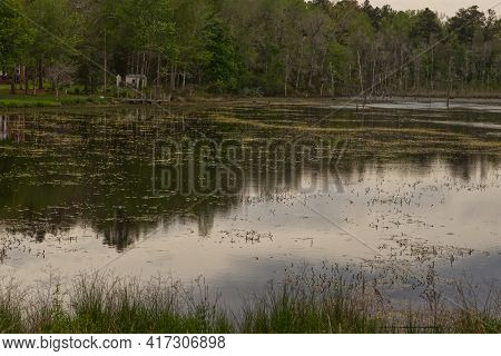 Burke County, Ga Usa - 04 15 21: A Lake With Growth At The Surface And A Wooden Dock And Shed