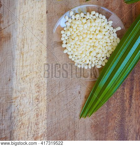 Organic Candelilla Wax In Chemical Watch Glass And Broadleaf Lady Palm Leaf On Wooden Background. (t
