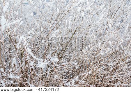 Bushes And Thin Trees With Branches In Fluffy White Snow On The Bank. Close-up. Winter North