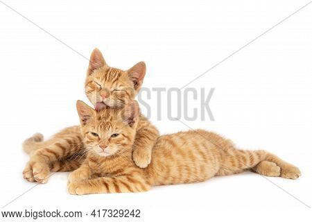A Closeup Shot Of One Ginger Cat Hugging And Licking The Other Isolated On A White Background