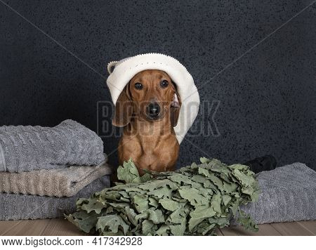 A Dachshund In A Bath Hat On His Head Sits By A Stack Of Large Towels And An Oak Bath Broom Lies Nex