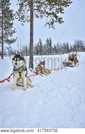 Husky Sled Resting In A Snowy Forest