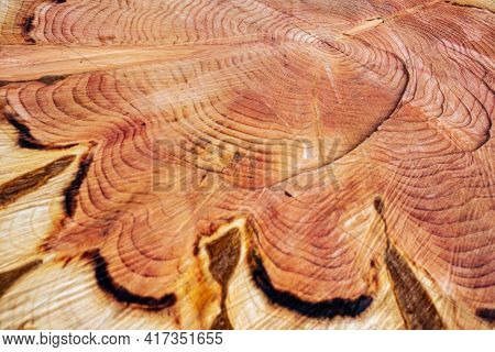 Close-up Of Fresh Wood Tree Cut With Cracks And Annual Rings. Natural Organic Texture With Cracks An