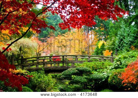 Bridge In A Garden
