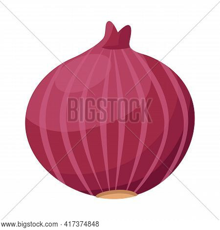 Vector Design Of Onion And Bulb Symbol. Graphic Of Onion And Fresh Stock Symbol For Web.