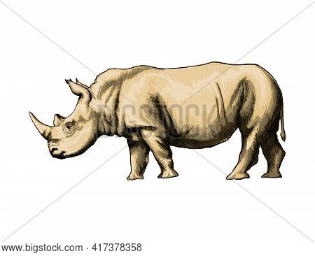 Rhinoceros From A Splash Of Watercolor, Colored Drawing, Realistic. Vector Illustration Of Paints