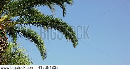 A Branch Of A Palm Tree Against A Blue Sky. Holiday. The Palm Tree Is Located On The Left. Grunge Pa
