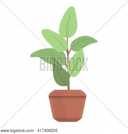 Ficus Plant Pot Icon. Cartoon Of Ficus Plant Pot Vector Icon For Web Design Isolated On White Backgr