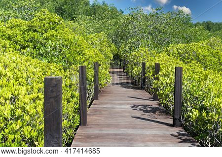 Tropical Forest Exotic Walkway On Wooden Bridge In Forest Jungle Of Mangrove Trees In Thailand Villa
