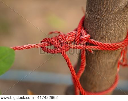 Red Rope Tightened Around Tree Trunk On Natural Bright Background. Red Rope With Knot Around Brown T