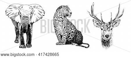 Hand Drawn Elephant, Leopard And Deer, Sketch Graphics Monochrome Illustration On White Background (