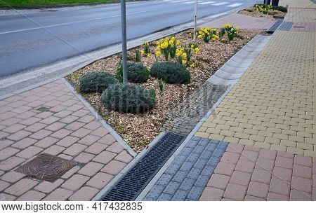 Along The Sidewalk With A Concrete Gutter Of Water Grow In The Flowerbed Of Yellow Flowers. Mulch Is