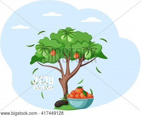 Large Deciduous Tree With Mandarin, Tangerine, Traditional Fruit, Citrus. Jeju Island In South Korea