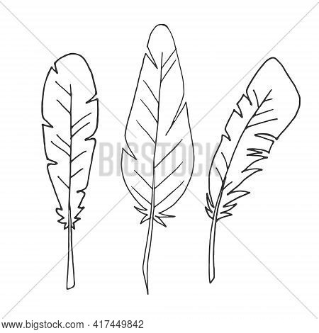 Set Of Feathers. Isolated Feathers On A White Background. Outline Illustration. Vector. Flat Illustr