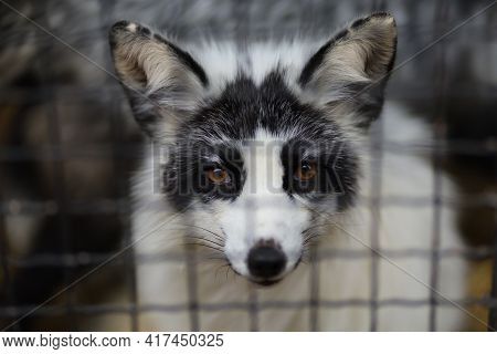 Animal In Captivity At The Zoo In A Cage