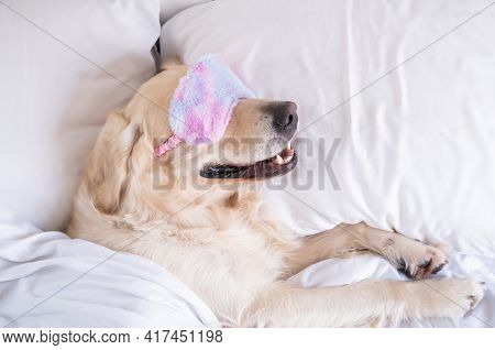 Golden Retriever Sleeps In A Pink Sleep Mask. The Dog Lies On A White Bed Under A Blanket.