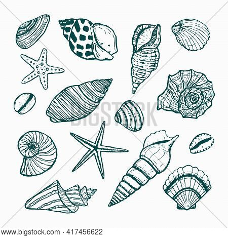A Collection Of Starfish And Seashells. Vector Drawn Outline Of Different Seashells. Underwater Worl