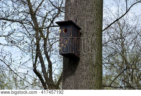 On A Branched Tree Is A Wooden Birdhouse Attached To A Tree In The Color Of Burnt Flame Camouflage.