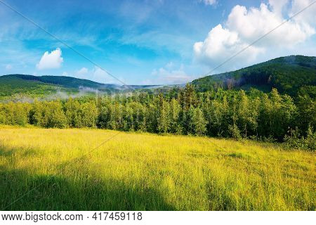 Forest On The Grassy Meadow In The Morning. Beautiful Countryside Landscape In Summertime. Fog Above