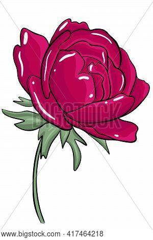 Single Bright Burgundy Peony. Garden Lush Flower. Juicy Peonies Are Blooming.vector.