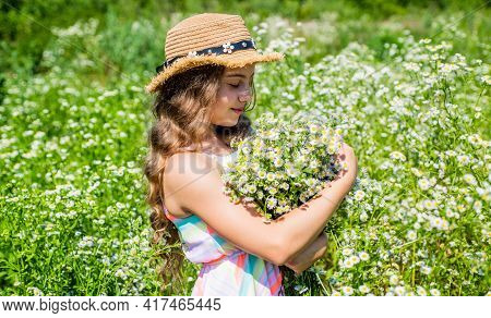 Countryside Idyll. Little Child Pick Flowers On Chamomile Field. Floral Shop. Holiday Celebration. S