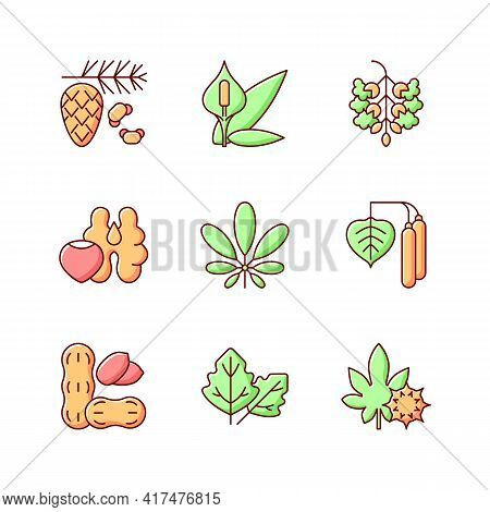 Allergens And Allergy Causes Rgb Color Icons Set. Cedar, Pine Tree Pollen. Peace Lily. Poplar Tree P