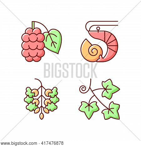 Seasonal Allergen Causes Rgb Color Icons Set. Mulberry On Branch. Crustacean And Mollusc. Poplar Tre