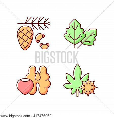 Cause Of Allergic Reaction Rgb Color Icons Set. Cedar And Pine Tree Pollen. Lambs Quarters. Tree Nut