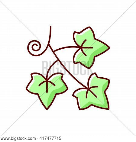 English Ivy Rgb Color Icon. Hedera Helix, Green Vine. Crawling Flowering Plant. Spring Foliage. Caus