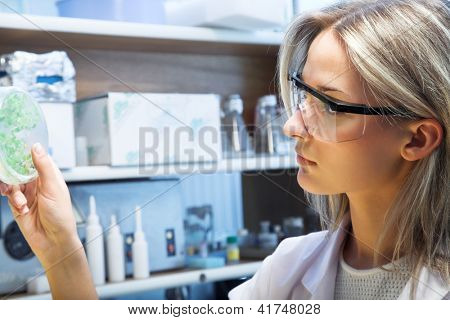 female researcher look at transgenic plant