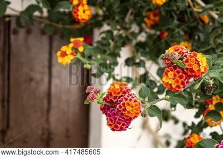 Colorful Lantana Flowers At The Door Of A House In Andalusia, Spain