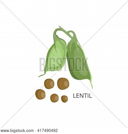 Lentil Grains And Pods With Naming Flat Vector Illustration Isolated On White.