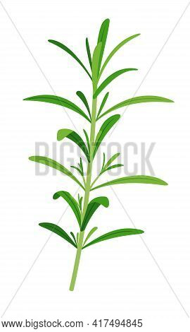 Vector Rosemary Sprigs Icon In Flat Style Isolated On White Background.