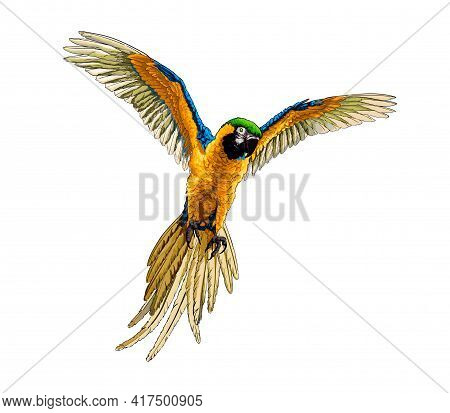 Parrot Macaw From A Splash Of Watercolor, Colored Drawing, Realistic. Vector Illustration Of Paints