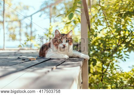 Fluffy Tabby Cat Resting On A Wooden Veranda In Summer With Copy Space. Rest And Relaxation Concept