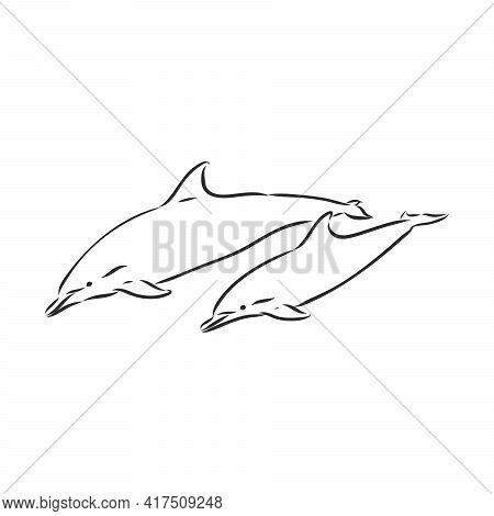 Simple Dolphin Silhouette. Dolphin, Vector Sketch On A White Background